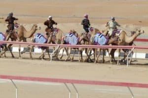 Camel trainers, Abu Dhabi