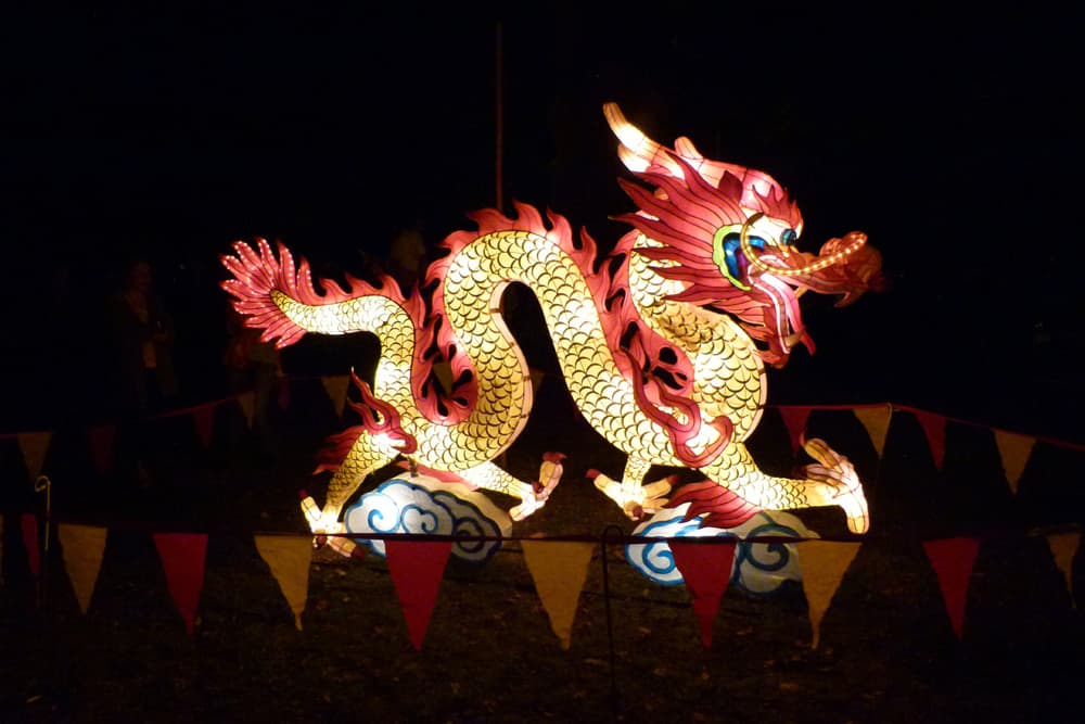 Dragon at the Christchurch Lantern Festival