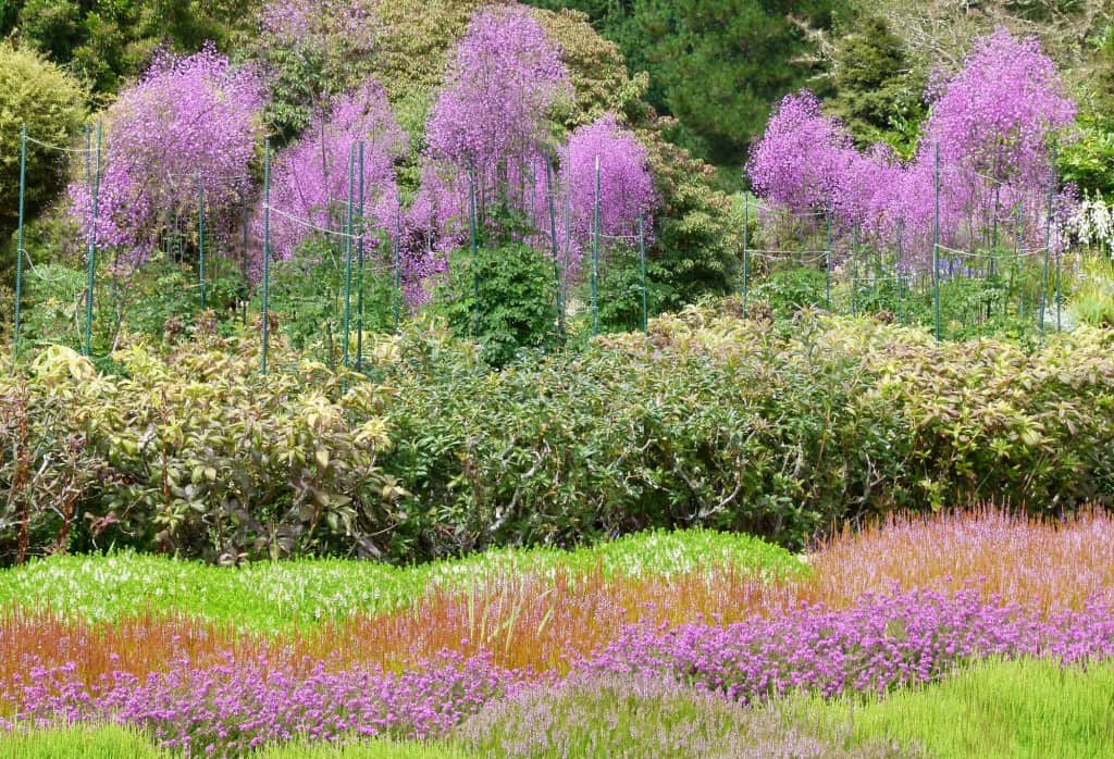 A border of heather