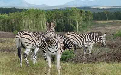 Spotting Wildlife at the Gondwana Game Reserve