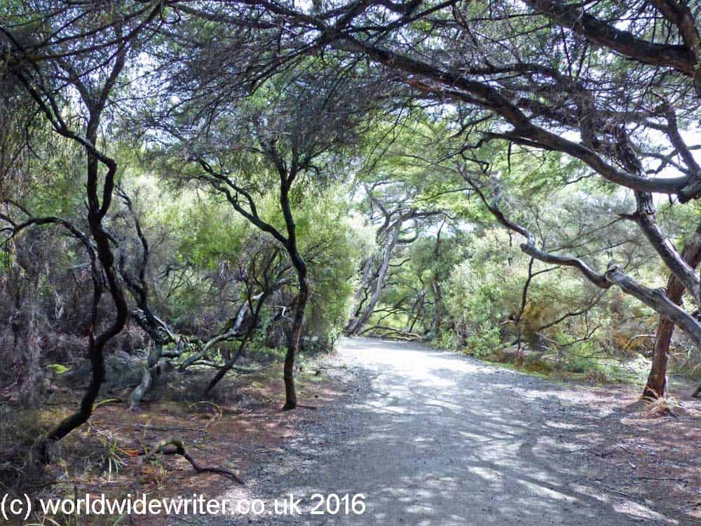 Forest path at Waiotapu