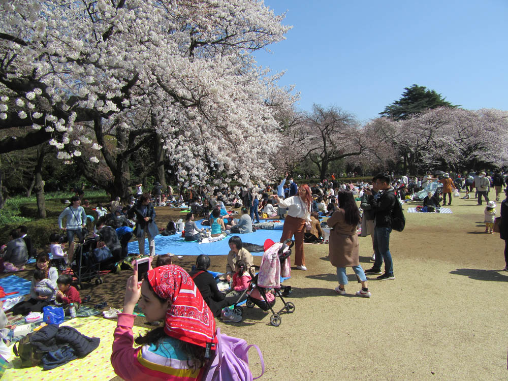 One of Tokyo's many parks