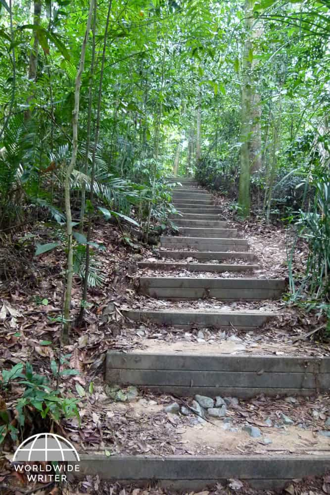 Steps leading into the jungle