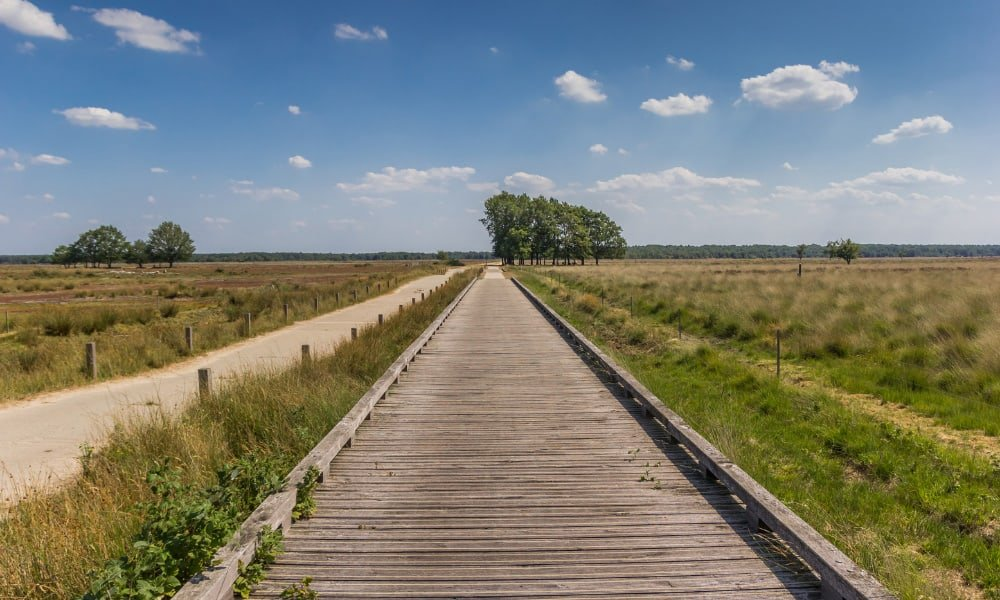 Open space with boardwalk and grassland