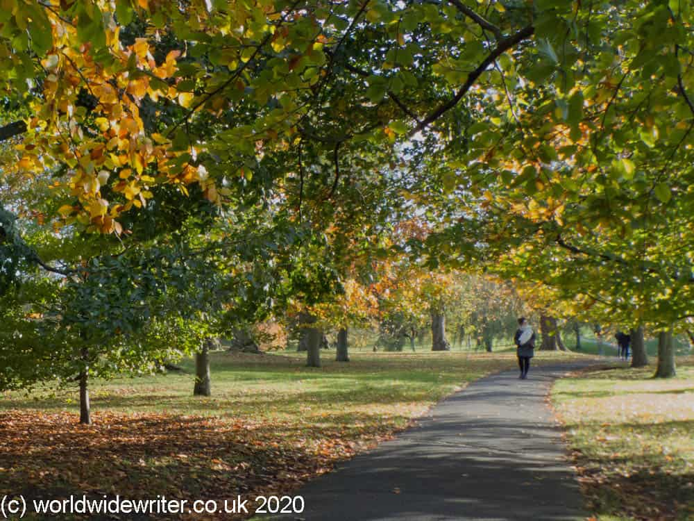 Autumn leaves in Greenwich Park