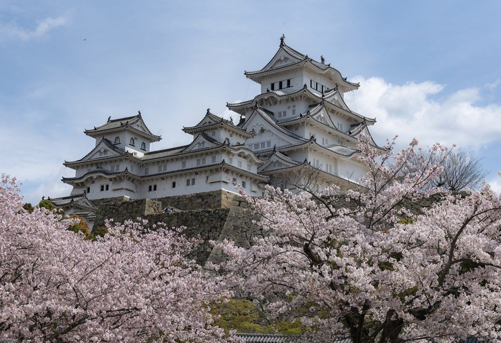 Japanese castle with cherry blossom