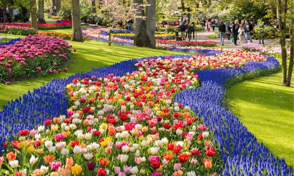 Park with flowers of all different colours