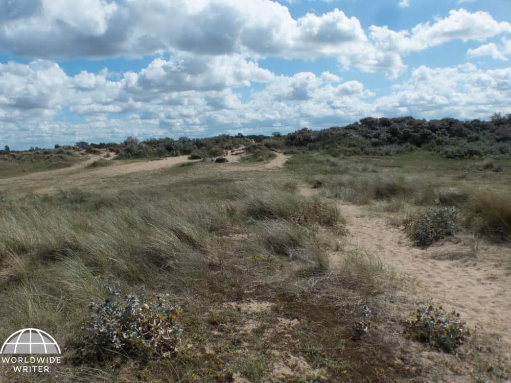 Coastal area with sand dunes and mixed vegetation