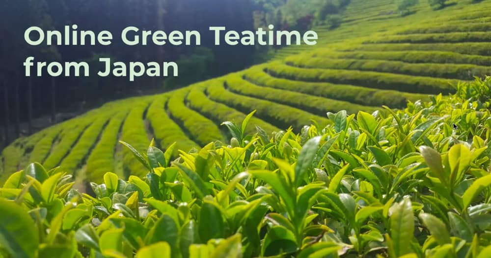 Green tea field with close up of tea plants