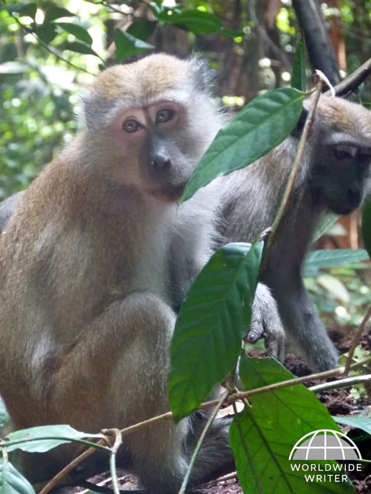 Two monkeys sitting in a tree