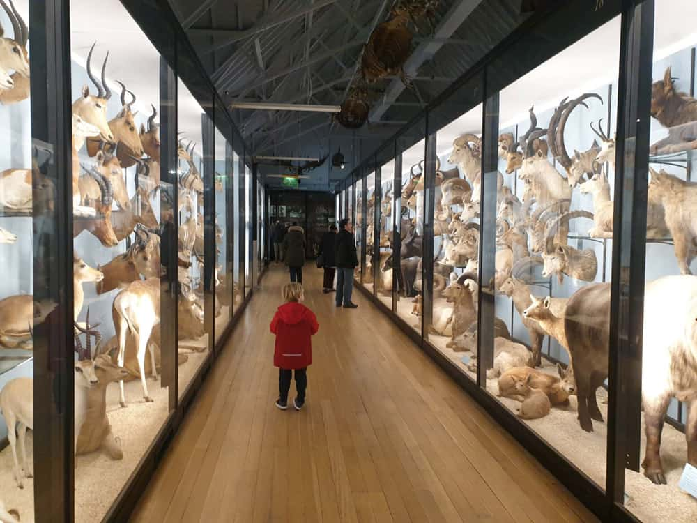 Display cases with animal heads at the Tring Natural History Museum