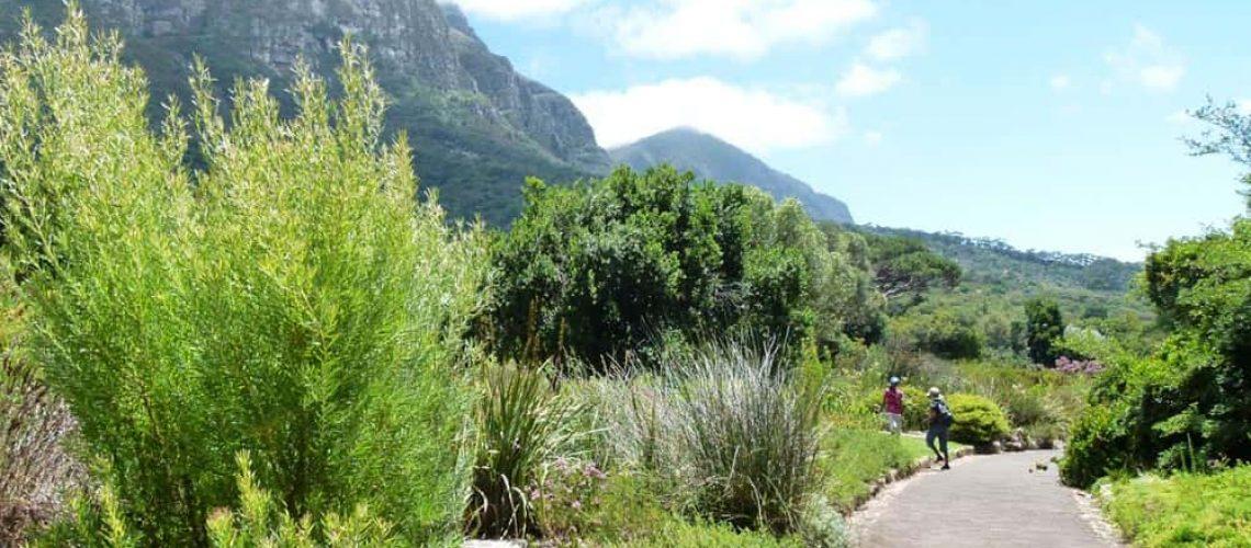 Kirstenbosch Botanical Gardens, Cape Town