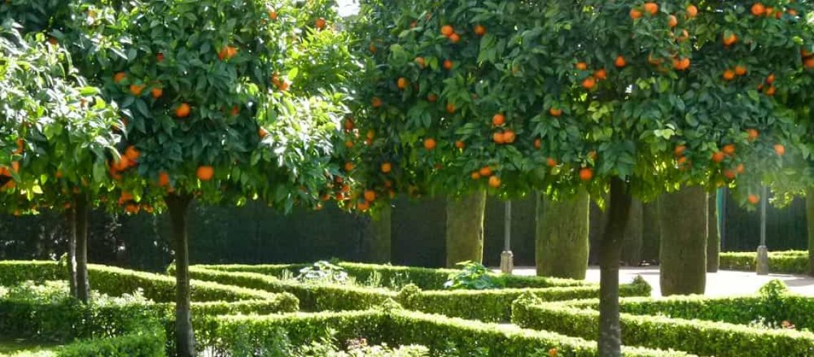 Orange trees at the Alcazar, Córdoba