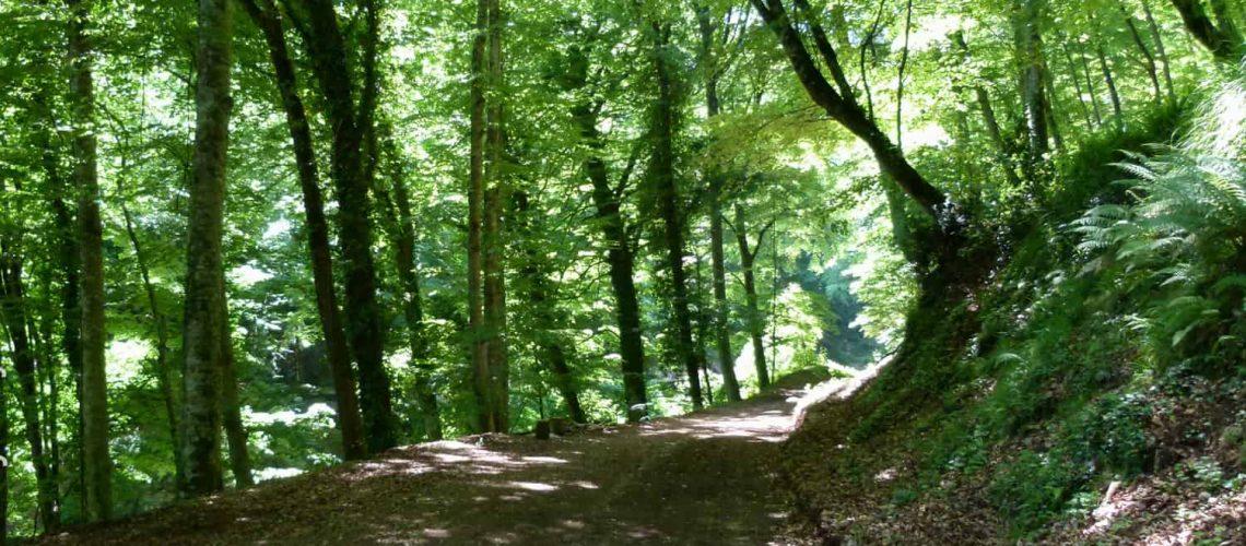 Umbra Forest, Puglia